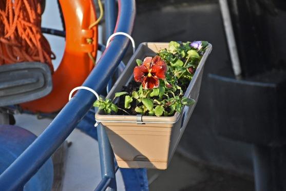 Optimismus pur - die ersten Blumen sind schon gepflanzt
