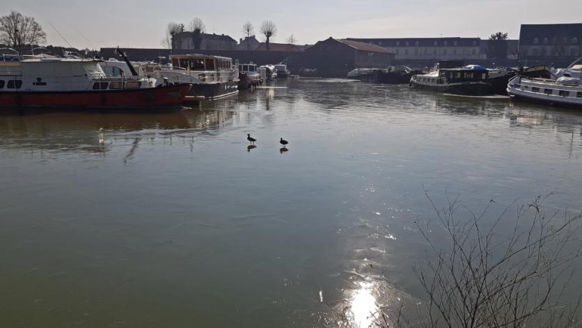 Enten auf dem Eis im Hafen
