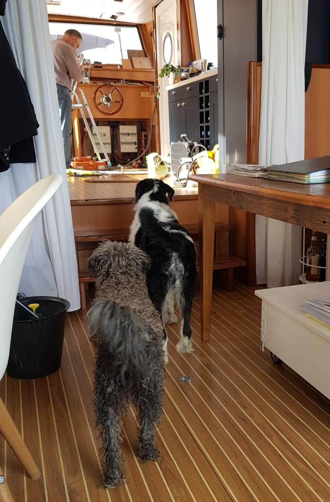Anpassarbeiten vom Schreiner und irritierte Hunde, die nicht recht verstehen was das alles soll