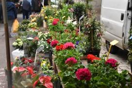 Blumen für Balkon und Garten