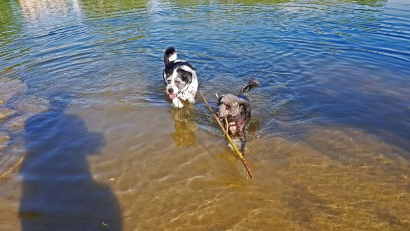 Die beiden Hunde in der Saône; Gleich mal den Parfümduft des Shampoos auswaschen