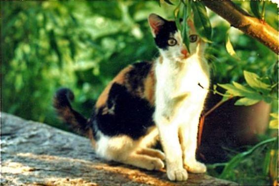 Julie 1995 in Bosco Luganese