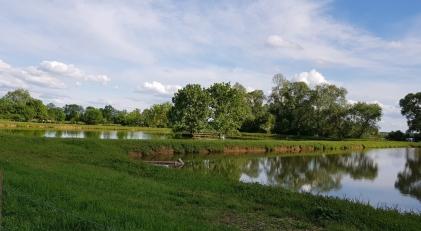 Fischteiche, gleich neben dem Fluss