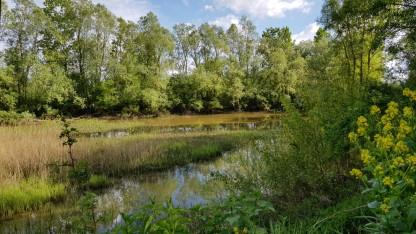 Der Teich hinter der Beobachtungswand