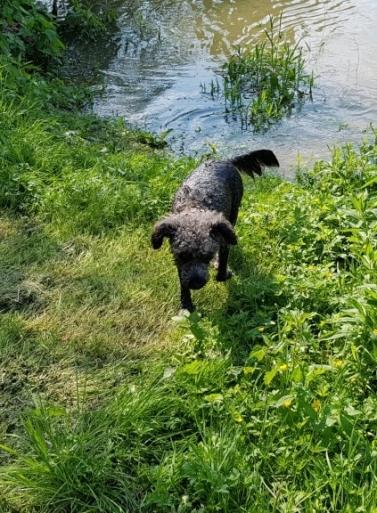Merry beim Ausstieg aus dem Wasser, klatschnass