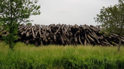 Aufgetürmte Baumstämme. Holzlager einer Fabrik die Latten für Holzterrassen herstellt