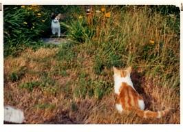 Julie und Tizian 1995 in Bosco Luganese