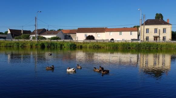 Eine Gruppe halbwüchsiger Enten bei der Anlegestelle in Paray-le-Monial