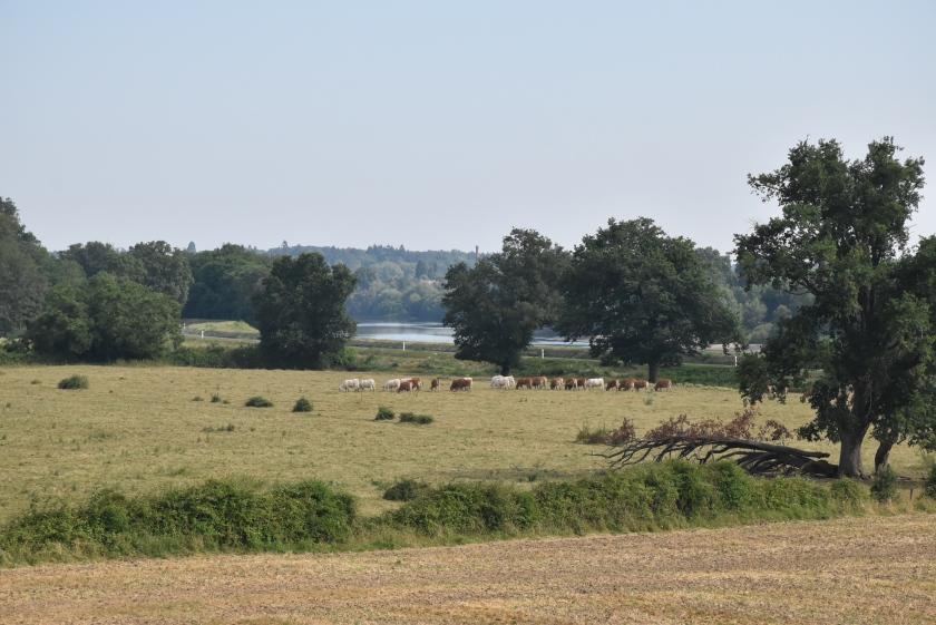 Landschaft kurz vor Briare mit der Loire in der Ferne. Im Vordergrund eine baumumstandene Weide mit Rindern