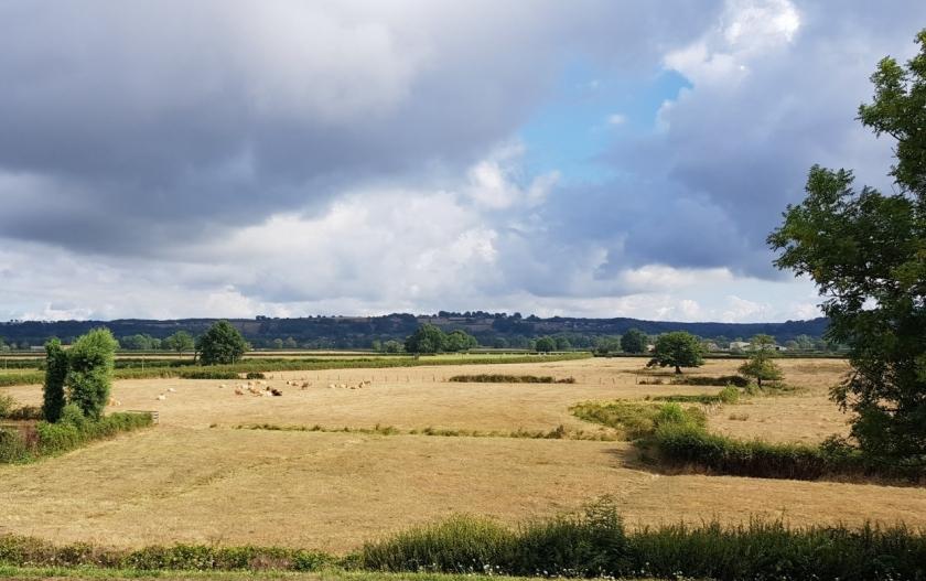 Weiden und abgeerntete Felder haben dieselbe gelbe Farbe