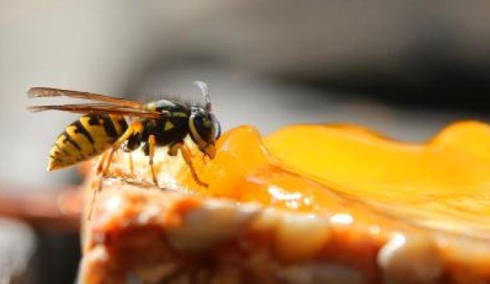 Liebe Wespen, bitteverschwindet