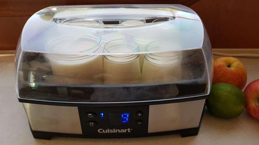 Hier wird gerade Joghurt ausgebrütet