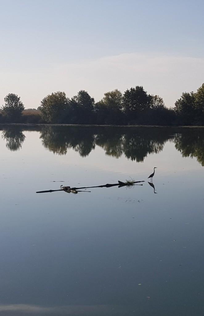 Ein Fischreiher auf einem im Fluss treibenden Baumstamm. Nichts bewegt sich hier!