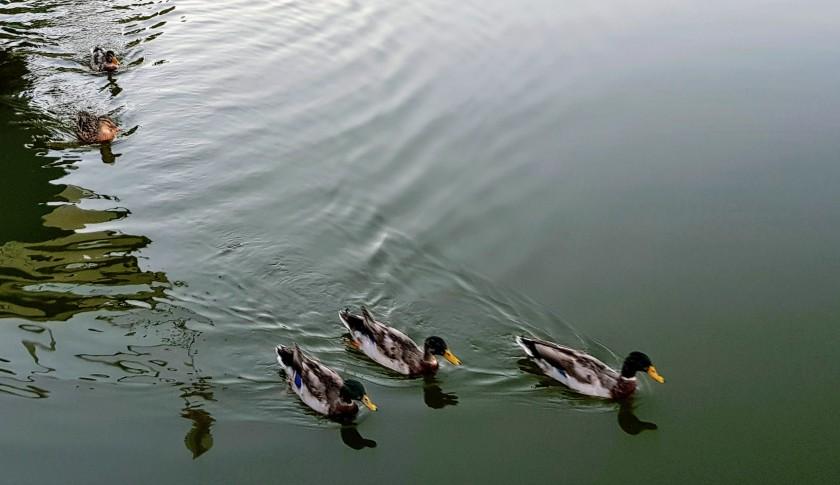 Abends: Die ersten Enten kommen schon an!