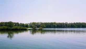 Halbinsel in der Saône (mit Schwanennest)
