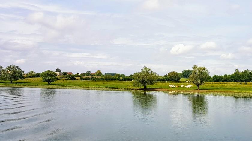 Am FLussufer ein Dorf in der Ferne und Rinder am Ufer