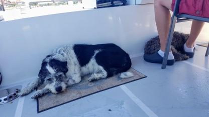 Müde Hunde. Bei 30°C am Schatten mussten wir sie nass halten!