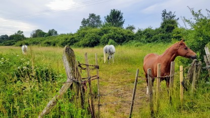Pferde in der wilden Wiese