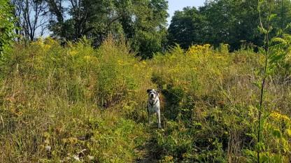 Unsere Abkürzung durch die Wildnis aus hohem Gras und wildem Buschwerk. Janusz scheint ungedurldig und fragt sich wann wir endlich kommen.