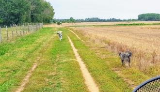 Willkommene Radlerpause, die Hunde können verschnaufen und tun, was Hunde so tun
