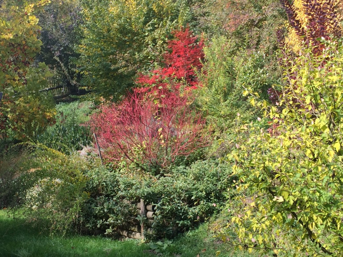 Jeden Herbst