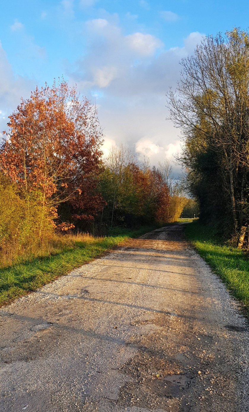 Waldweg mit ein paar trockenen Blättern für meinen Spass!