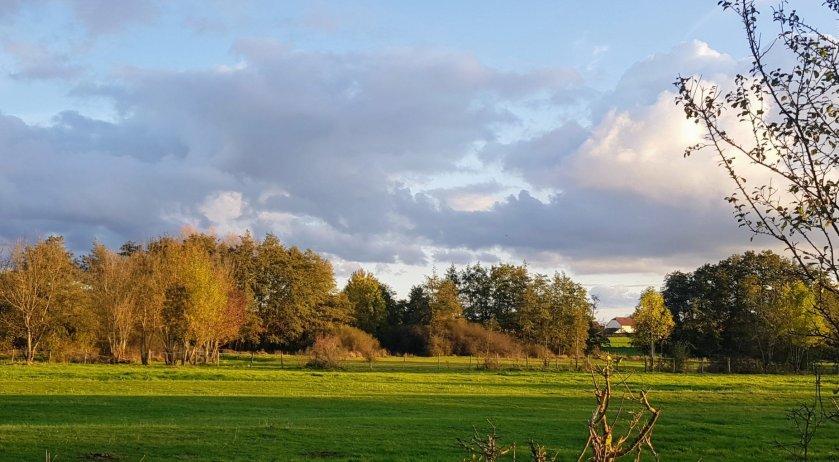 Blick auf eine hecken- und baumbestandene Wiese mit Licht-und Schattenspiel