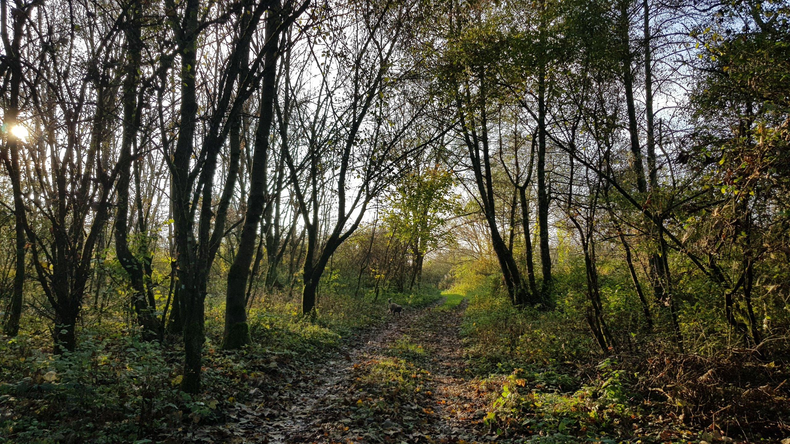 Waldweg im Licht-und Schattenspiel. Ich liebe das Blätterrascheln unter den Füssen.