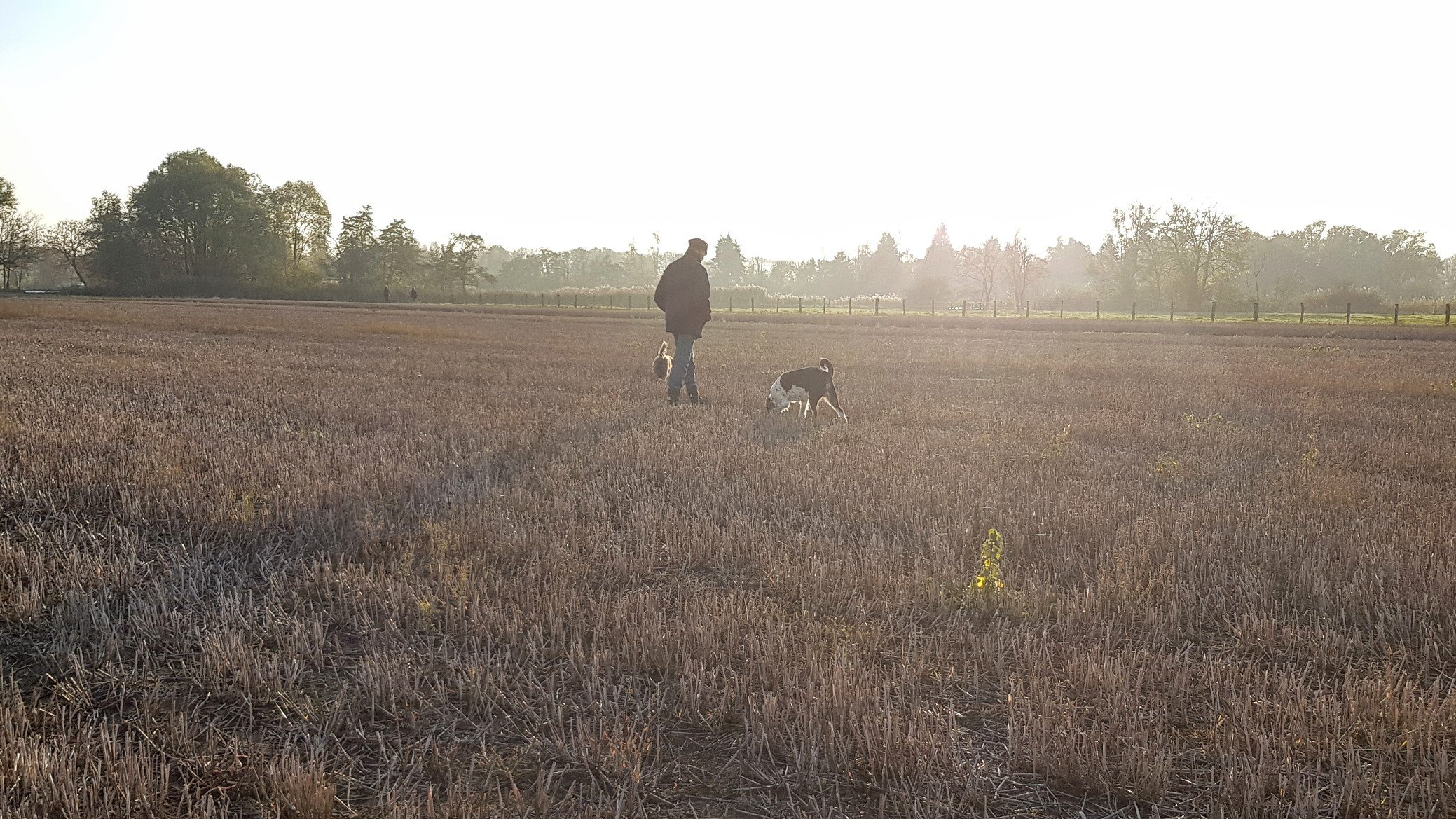 November-Spaziergänger auf Stoppelfeld im Gegenlicht