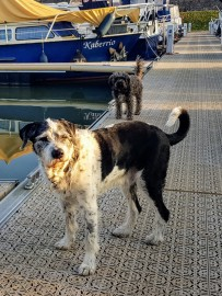 Ungeduldige Hunde, darauf wartend, dass wir endlich aus dem Boot kommen zum spazieren