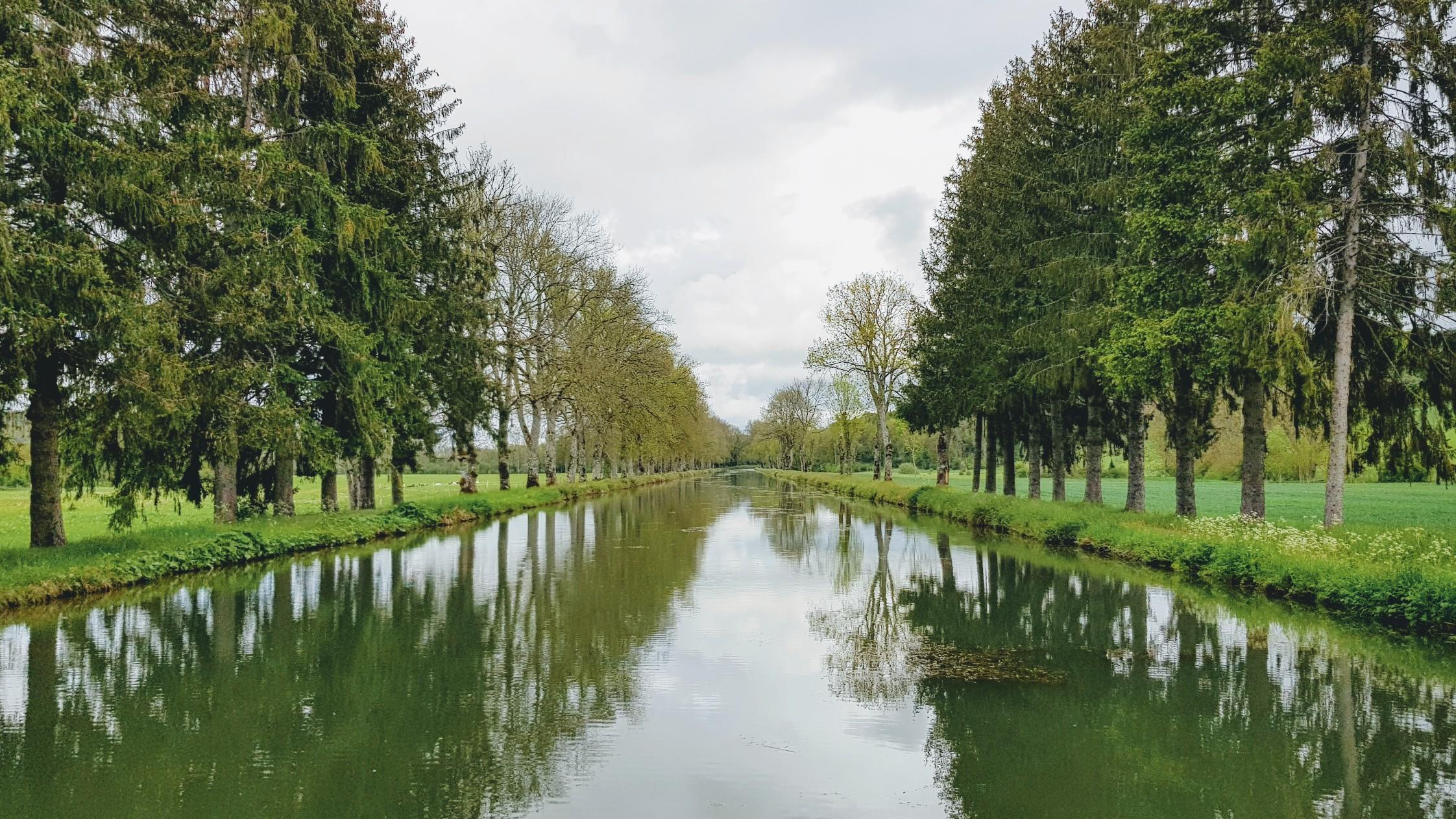 Tannen am Kanal sind selten. In Viéville gibt es ein paar hundert Meter davon.