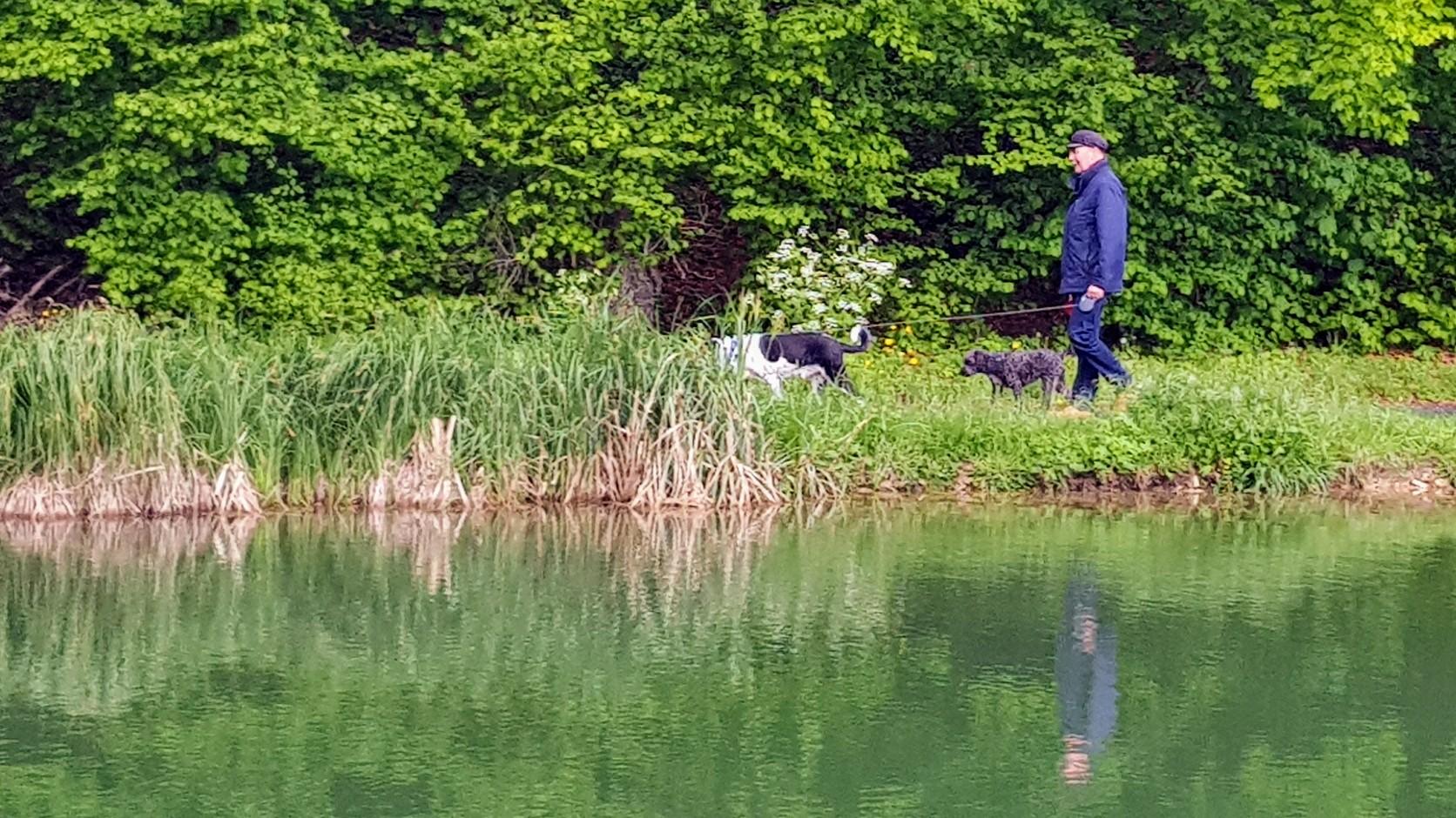 Meine drei Lieben am Hundespaziergang am Waldrand gegenüber dem Hafen. In 5 Minuten wird es nur so herunter prasseln!