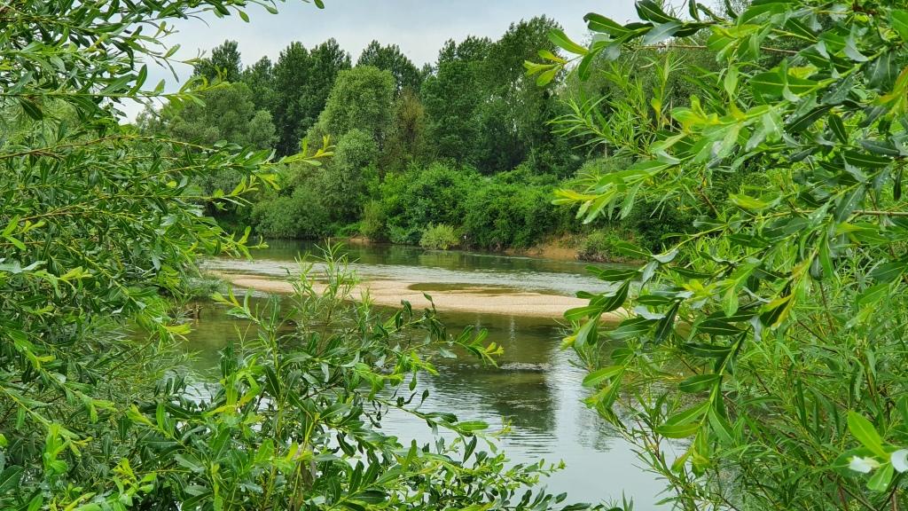 Blick vom Kanal aus, durch Bäume und Büsche, auf die Marne