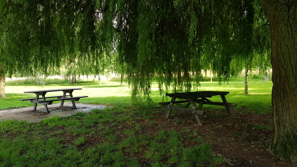 Schattiger Picknickplatz mit riesigen Weiden am Ufer der Marne