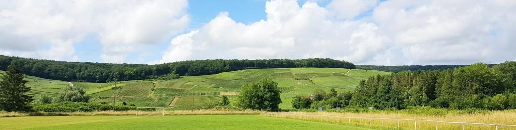 Rebberge zuhauf ziehen sich den Hügel hinauf, oben gekrönt durch Wald