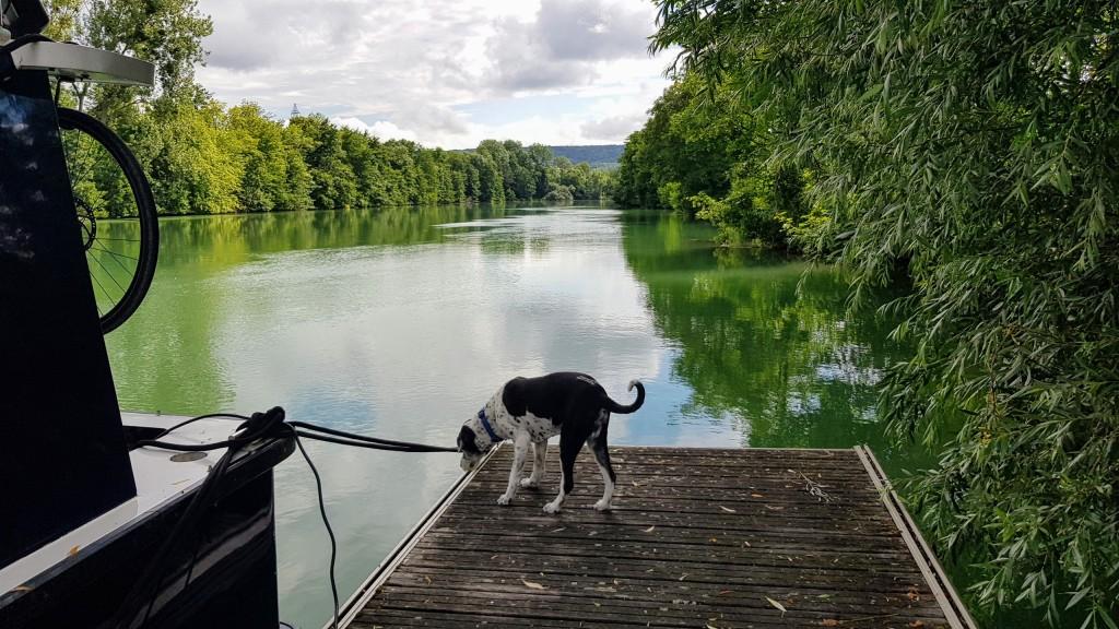 Janusz, der grosse schwarz-weisse Hund, auf dem kleinen Steg