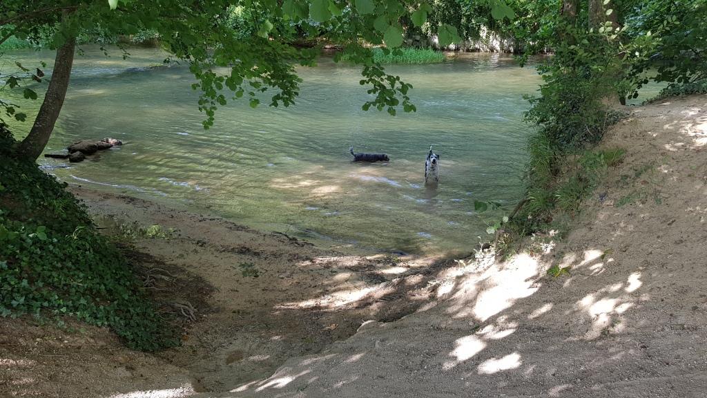 Vor der Abfahrt nehmen die Hunde ein letztes Bad im Flüsschen Veyle in Sillery