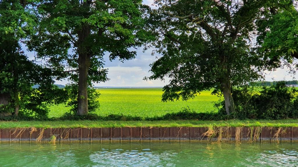 Blick ins Grüne. Ausgeräumte, flache Landschaft.